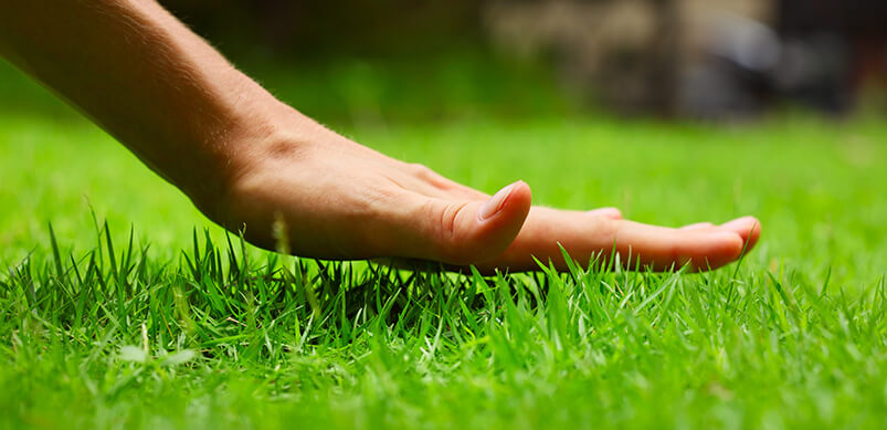 Hand Above Long, Green Grass