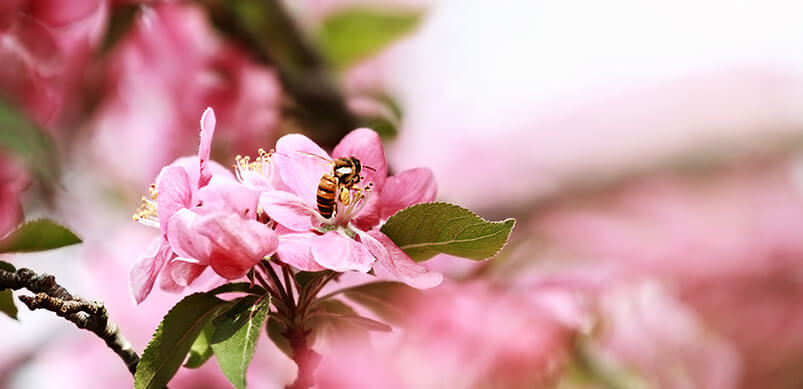 Insects On Pink Flowers