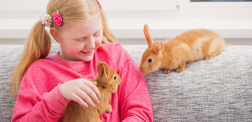 Little Girl With Two Rabbits On Sofa