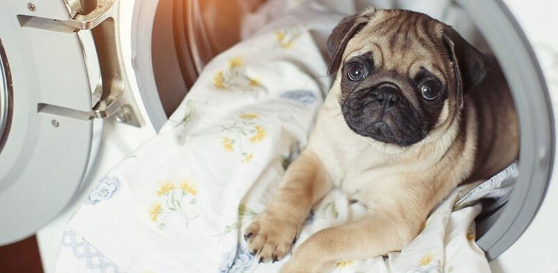 Puppy On Blanket In Washing Machine