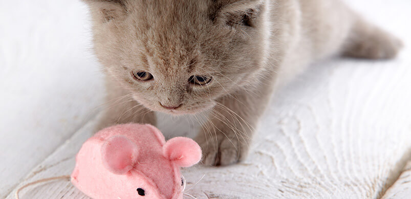 Kitten Playing With Pink Mouse Toy