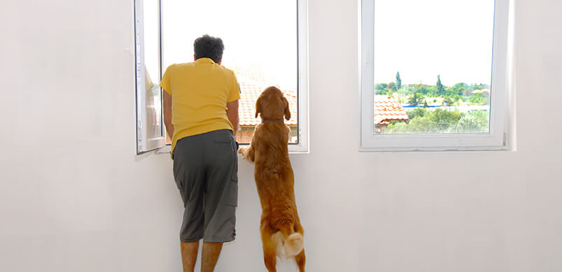 Man And Dog Looking Through Open Window