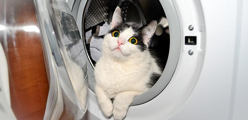 Cat Inside A Washing Machine