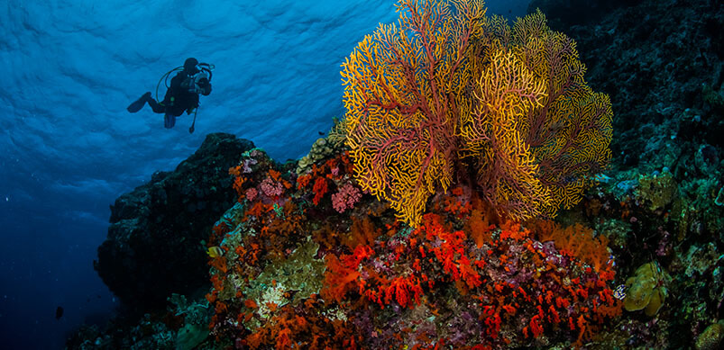 Photo Of Colourful Coral Underwater