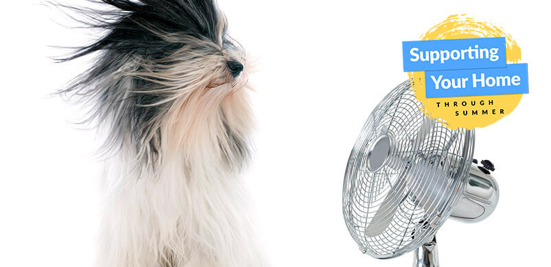 Dog Sitting In Front Of Fan