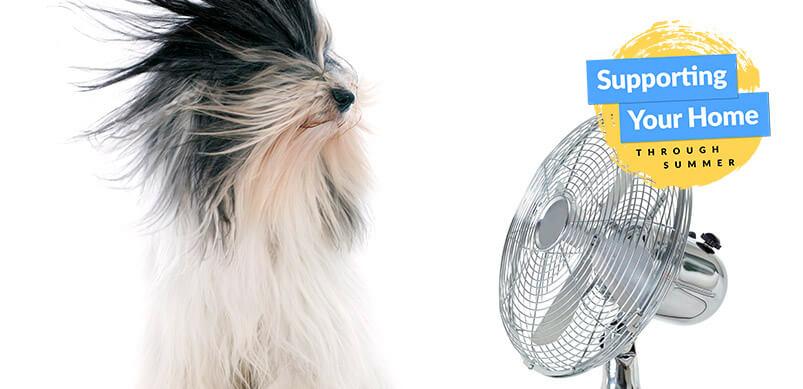 Dog Sitting In Front Of Fan