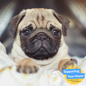How To Rid Your Home Of Pet Odours!