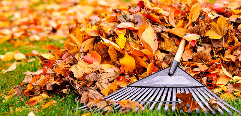 Garden Rake Sweeping Autumn Leaves