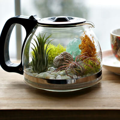 Planter Pot Made Using Coffee Machine Glass Jar