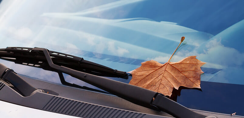 Close Up On Wiper Blade With Autumn Leaf