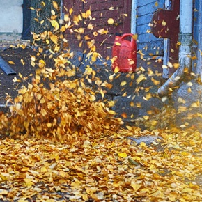 Garden Vacuum Clearing Autumn Leaves
