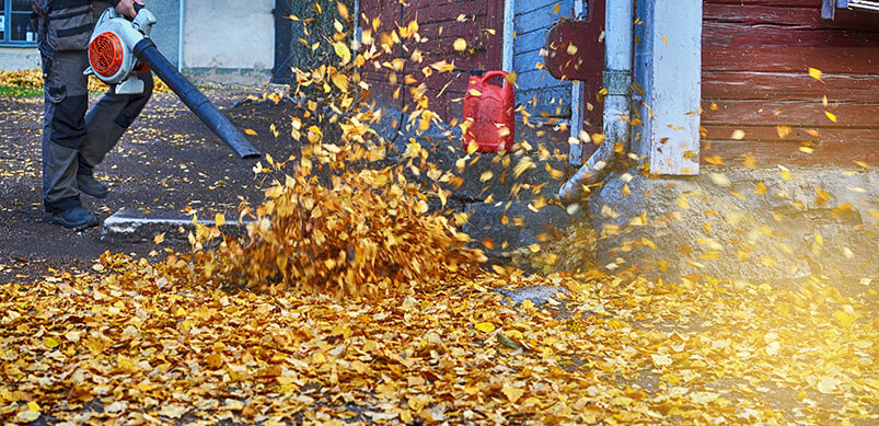 Garden Vacuum Clearing Autumn Leaves