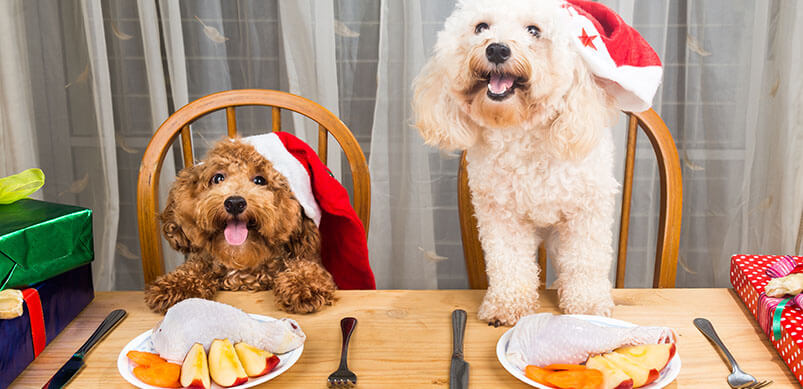 Dogs Enjoying Their Christmas Dinner