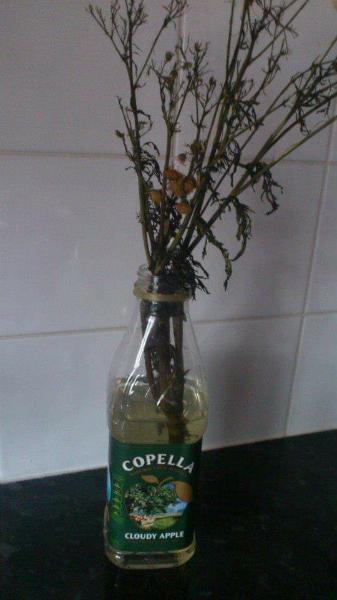 Weed Flowers Inside A Juice Bottle
