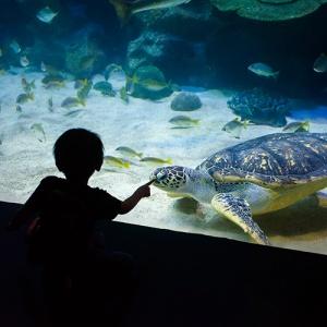 Child Looking Into Glass At Aquarium