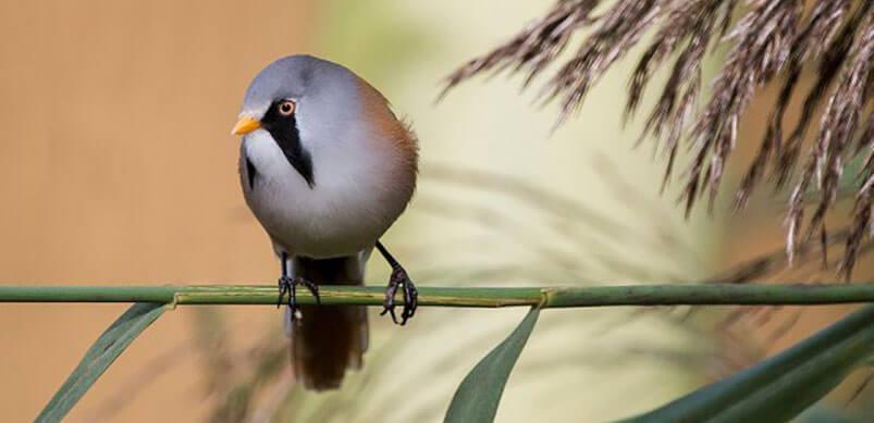 Bird On Branch At Blakeney Point In Norfolk