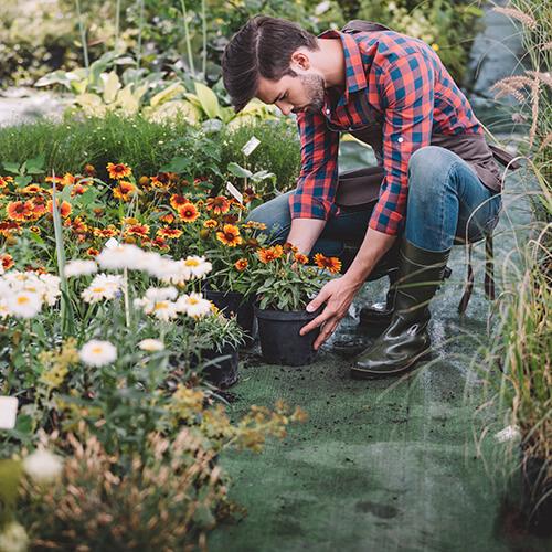 Man Planting Flowers In Garden