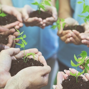 Young People's Hands Holding Green Shoots