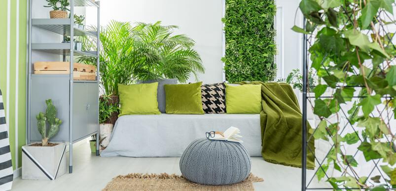 Plants Inside Home
