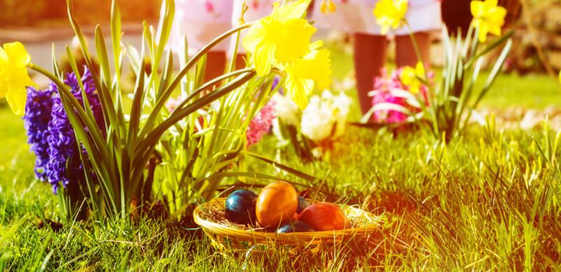 Basket of Eggs In Garden