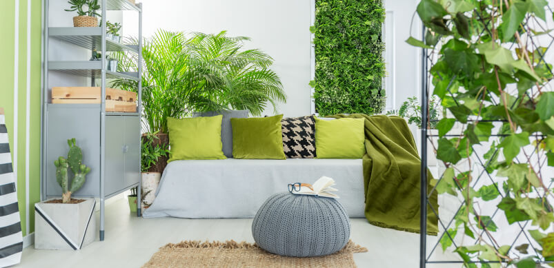 Home With Outdoor Plants And Colours