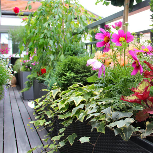 Flowers On Small Outdoor Space