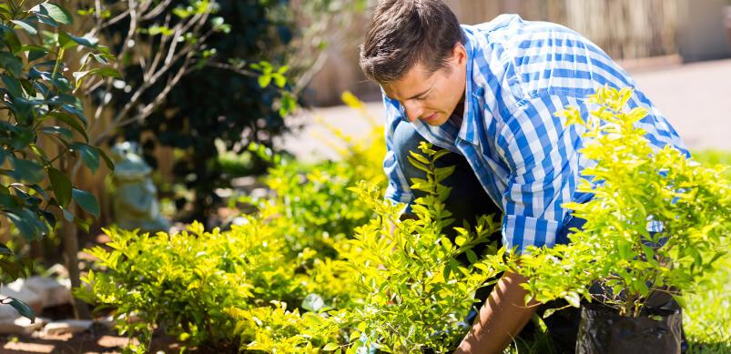 Man Planting Wildflower