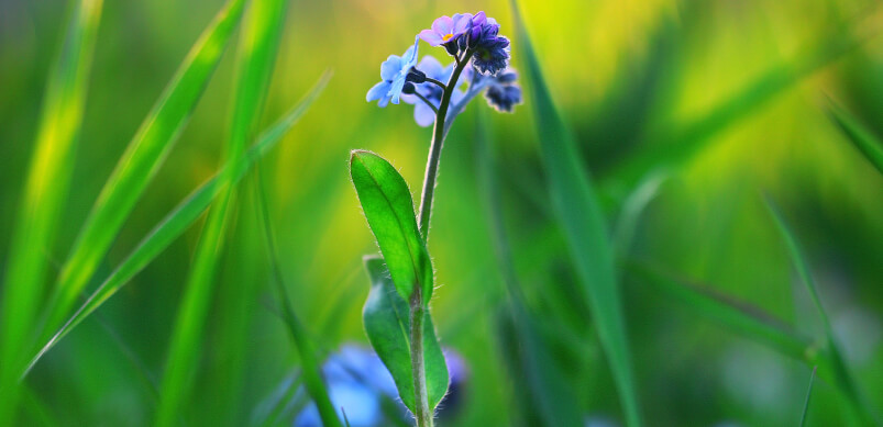 Wildflower Sprouting In Grass