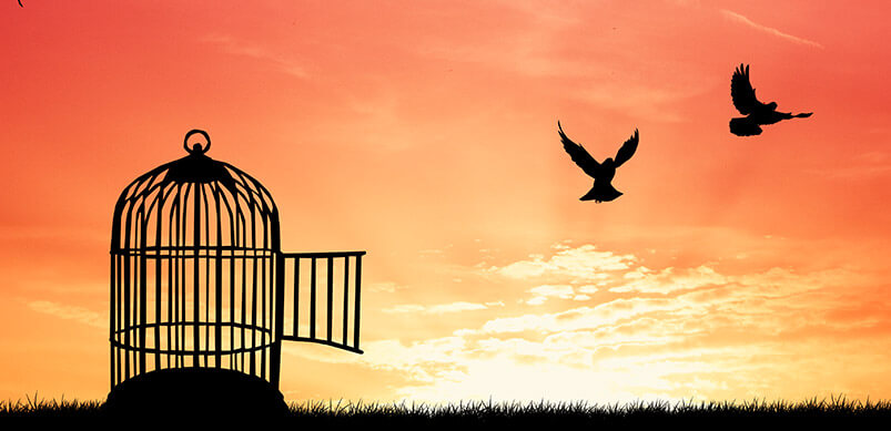 Birds Flying Out Of Cage At Sunrise