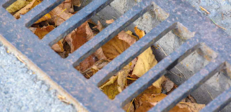 Outdoor Drains Clogged With Leaves