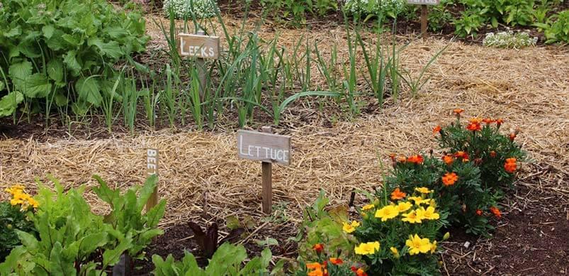 Labelled Flower Beds