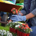 10 Easy Ways to Repair Your Neglected Garden