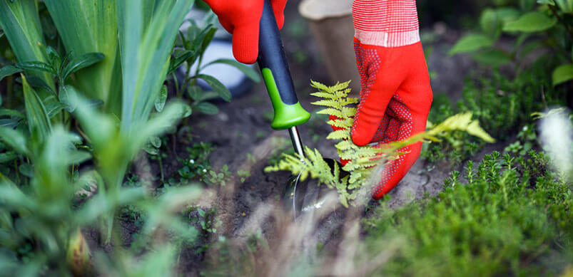 Hands Removing Weeds