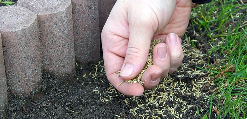 Hand Laying Grass Seeds