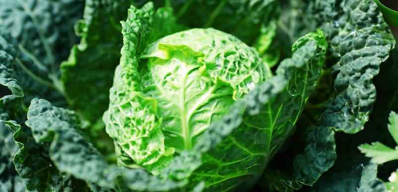 Wedge of Lettuce
