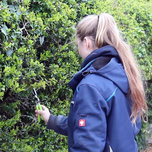 Amy Pruning garden With Tool