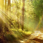 The Impact of Nature on our Mental Health