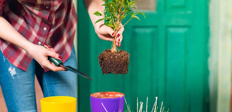 Plant Pot Changing