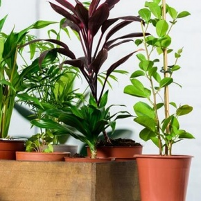 Houseplant Collection
