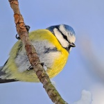 How to attract nature and wildlife into your garden