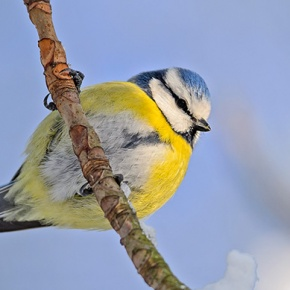 Wild Bird On Tree Branch