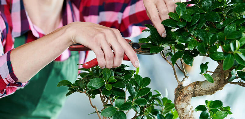 Plant Being Pruned