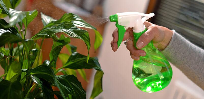 Houseplant Being Sprayed