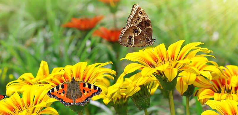 Butterflies In Long Grass