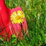 To weed or not to weed: How to tell what needs weeding in your garden