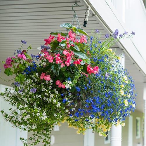 Hanging Basket In Garden