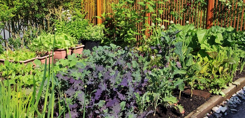 Vegetable Allotment