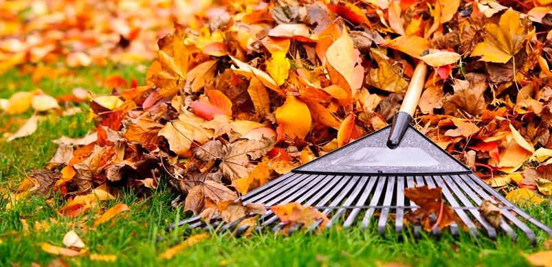 Autumn Leave With Rake